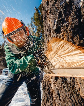 about pro tree removal mornington peninsula