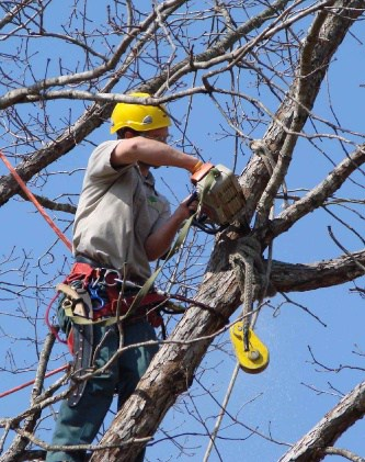 tree services mornington peninsula