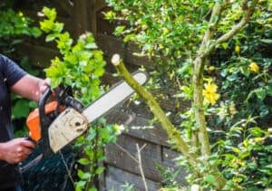 Tree Pruning mornington peninsula