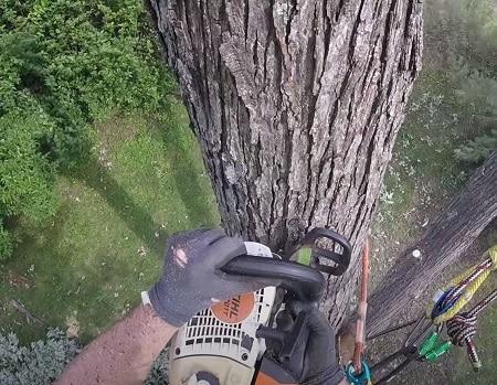 tree removal seaford