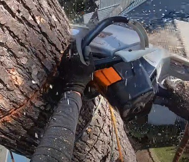 Tree Removal Carrum Downs